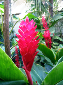 ginger flower for wedding